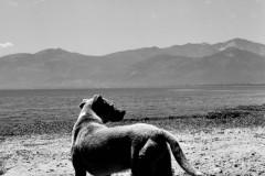 Stray Dog, Greece, 2015.